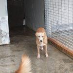 JANE  cagnolina tenera e delicata