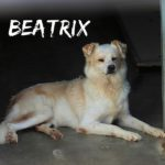 BEATRX piccolina delicata