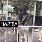 CHARISA e la famiglia scomparsa