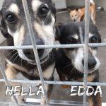 EDDA ed HELLA  sorelle per sempre VIDEO