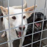MAGDA  in canile fin da cucciola