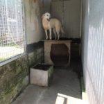 STEPHANIE  bella Labrador  da aiutare