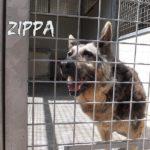 ZIPPA  abbandonata a tre anni