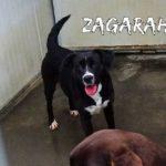 ZAGARAH abbandonata a due anni