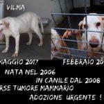 VILMA è nata nel 2006 !