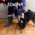 EDWINA  solo 8 kg ma tutti di allegria
