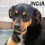 INDIANA scaricataa  a due anni